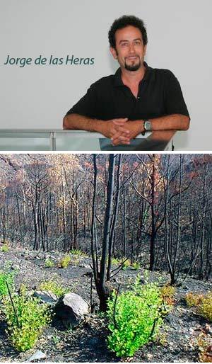 ¿Que hacer después del fuego? - Hablando con Científicos - CienciaEs.com