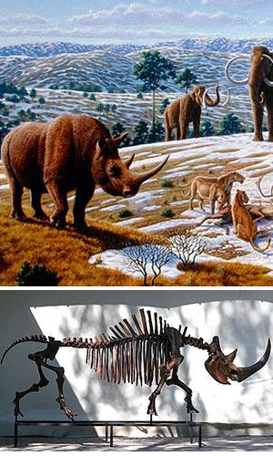 El rinoceronte lanudo - Zoo de fósiles podcast - CienciaEs.com