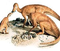 Maiasaura - Poscast Zoo de Fósiles - CienciaEs.com