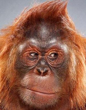 ¿Por qué no tenemos cara de mono? - Quilo de Ciencia podcast - CienciaEs.com