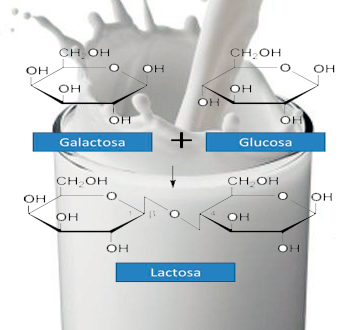 Dulce leche sin lactosa - El Neutrino Podcast  - CienciaEs.com