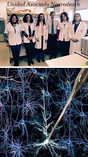 Supervivencia y muerte neuronal. - Podcast Hablando con Científicos - CienciaEs-com