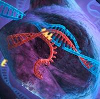 Ejercicio, Ondas Gravitacionales y CRISPR - Podcast Ciencia Fresca - CienciaEs.com
