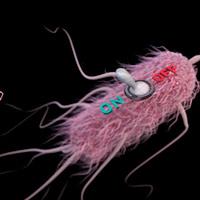 Diseñada para morir - Quilo de Ciencia podcast - CienciaEs.com