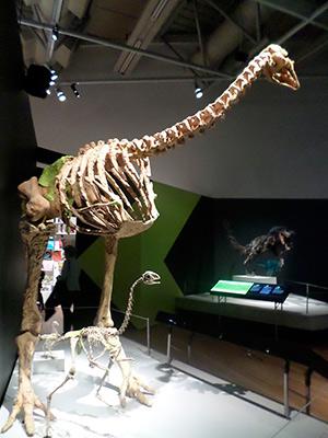 Las dromornítidas, patos gigantes australianos - Zoo de Fósiles - CienciaEs.com