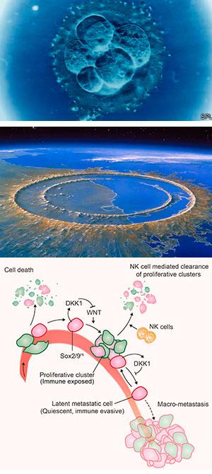 Asimetría y desarrollo - Ciencia Fresca - CienciaEs.com