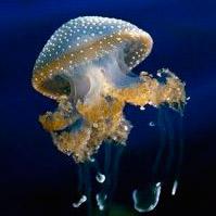 Encuentro con medusa - Quilo de Ciencia Podcast - CienciaEs.com