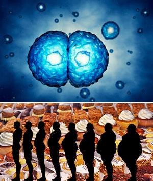 El fármaco madre. Gordura. Podcast Quilo de Ciencia - CienciaEs.com