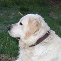 Pelvis y perro - Podcast Quilo de Ciencia - CienciaEs.com
