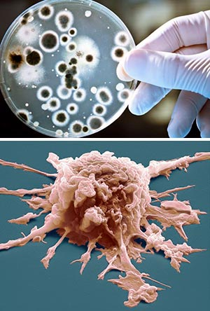 esurrección molecular y evolución. Traición en el corazón de los tumores. Quilo de Ciencia podcast - CienciaEs.com