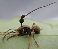 Hongos, hormigas y evolución - Quilo de Ciencia