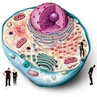 La célula, un millón de veces más grande _ Ciencia Extrema - CienciaEs.com