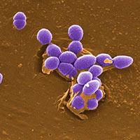 Bacterias por la tolerancia - Quilo de Ciencia - CienciaEs.com