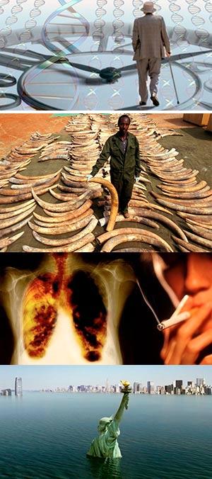 Éxito, genes y elefantes.  Ciencia Fresca Podcast - CienciaEs.com