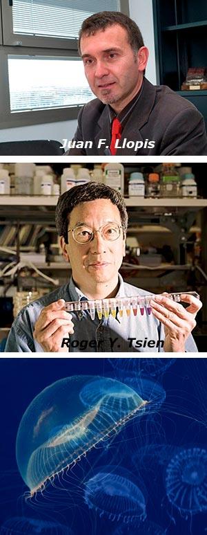 Proteinas fluorescentes - Hablando con Científicos podcast - CienciaEs.com