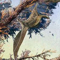 Hypuronector - Zoo de Fósiles - CienciaEs.com