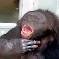Plumas de dinosaurio. Monos que no hablan. Ciencia Fresca podcast - CienciaEs.com