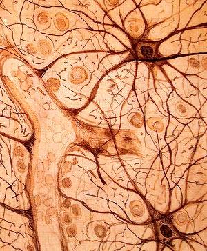 Astrocitos - Cierta Ciencia podcast - CienciaEs.com