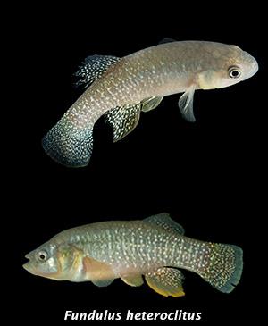 Rápida evolución antitóxica - Quilo de Ciencia podcast - CienciaEs.com