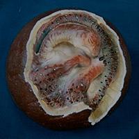 Huevos de dinosaurio - Quilo de Ciencia podcast - CienciaEs.com