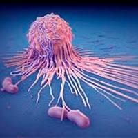 Guerra por los antioxidantes - Quilo de Ciencia podcast - CienciaEs.com