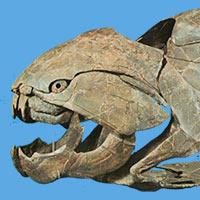 Dunkleosteus - Podcast Zoo de Fósiles - CienciaEs.com
