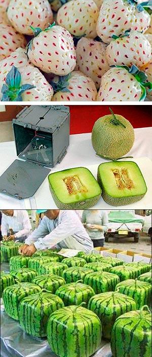Melones cuadrados, fresas blancas - Cierta ciencia podcast - CienciaEs.com