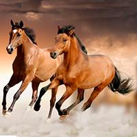 La domesticación del caballo- Quilo de Ciencia podcast - CienciaEs.com