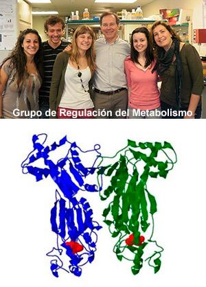 Regulación del metabolismo - Hablando con Científicos - CienciaEs.com