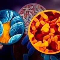 Bacterias, multiverso - Ciencia Fresca podcast - CienciaEs.com