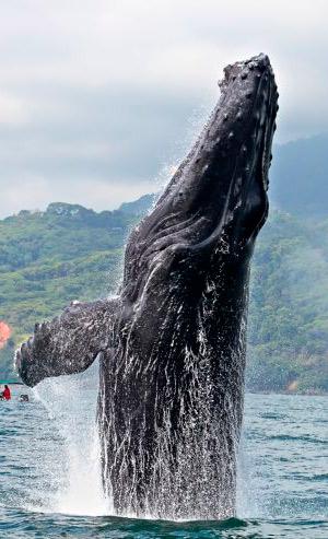 ¿Cuándo crecieron las ballenas? - Quilo de Ciencia podcast - CienciaEs.com