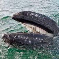 Planetas sin estrellas, ballenas, cirros y expectativas de grupo - Ciencia Fresca podcast - CienciaEs.com