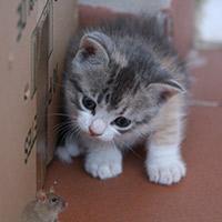 La curiosidad no mata al gato - Cierta Ciencia podcast - CienciaEs.com