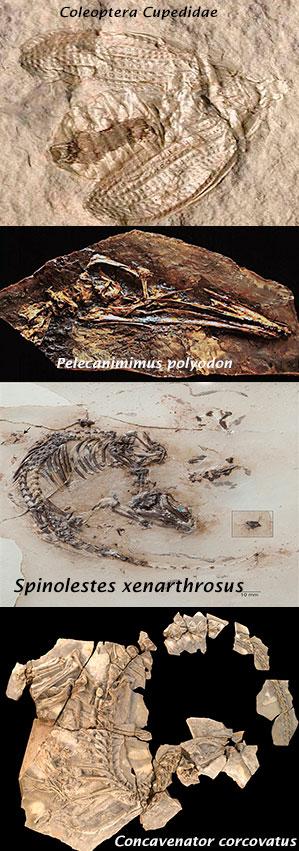 Las Hoyas - Podcast Zoo de Fósiles - Cienciaes.com