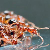Hormigas y huracanes - Quilo de Ciencia Podcast - CienciaEs.com