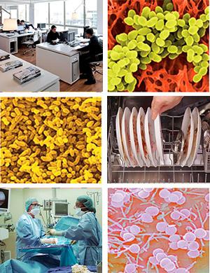 Microbiota doméstica - Quilo de ciencia podcast - CienciaEs.com
