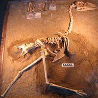 Llallawavis - Zoo de Fósiles podcast - CienciaEs.com