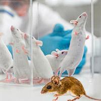 Metaorganismos silvestres y de laboratorio - Quilo de Ciencia podcast - CienciaEs.com