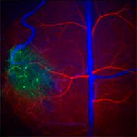 Puntos cuánticos - Vanguardia de la Ciencia podcast - CienciaEs.com