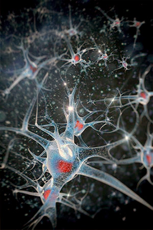 Resultado de imagen de La maraña de conexiones del cerebro