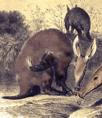 Bibymalagasy. Zoo de Fósiles podcast - CienciaEs.com
