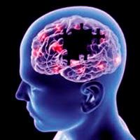 Receptores de opiáceos - Quilo de Ciencia - CienciaEs.com