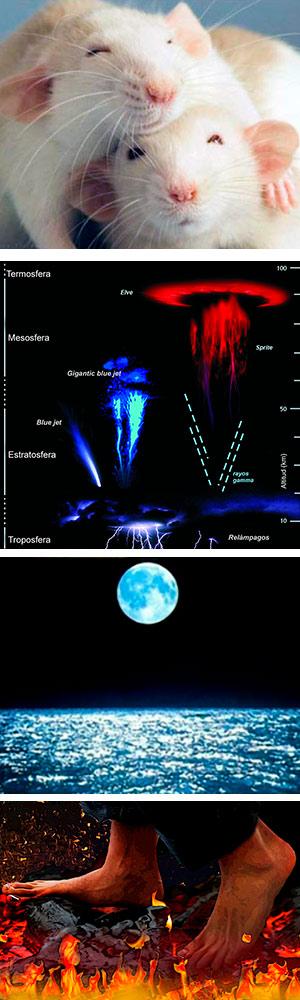 Kisspeptina, ASIM, mareas y dolor - Vanguardia de la Ciencia podcast.
