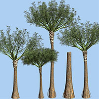 Primer árbol - Zoo de Fósiles - CienciaEs.com