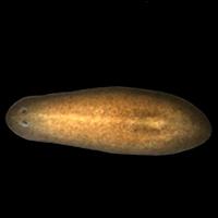 Genómica célula a célula - Quilo de Ciencia podcast - CienciaEs.com