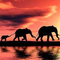 Sismos elefantinos. Longevidad. Nidos de dinos. Agujero de Ozono. - Vanguardia de la Ciencia podcast - CienciaEs.com