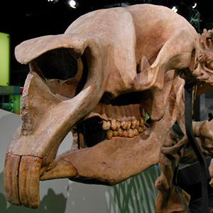 Diprotodon, el mayor marsupial de todos los tiempos - Zood de Fósiles podcast - CienciaEs.com