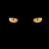 Escapando hacia la noche - Quilo de Ciencia podcast - CienciaEs.com
