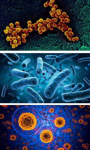 Cruzando la frontera entre dominios de la vida - Quilo de ciencia - CienciaEs.com