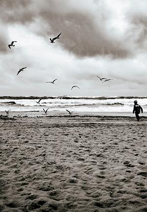 Riesgo y huida de aves - Hablando con Científicos podcast - CienciaEs.com